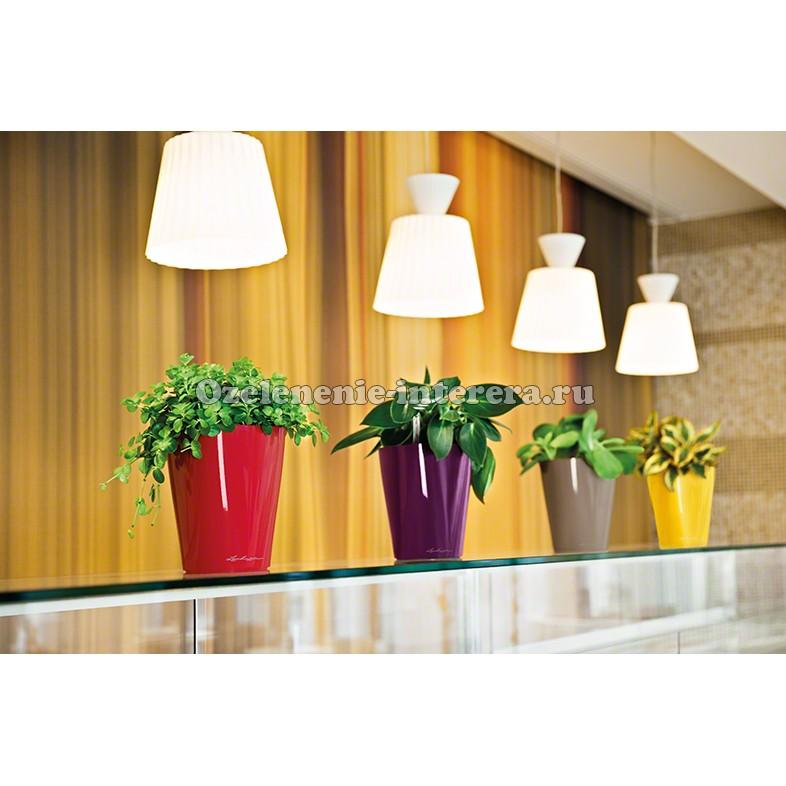 Длинные горшки для комнатных цветов